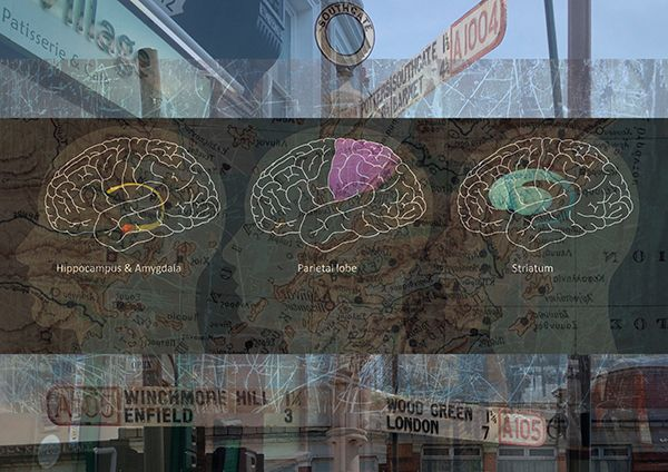 Cross sections of drawing of brains superimposed on an urban environment background