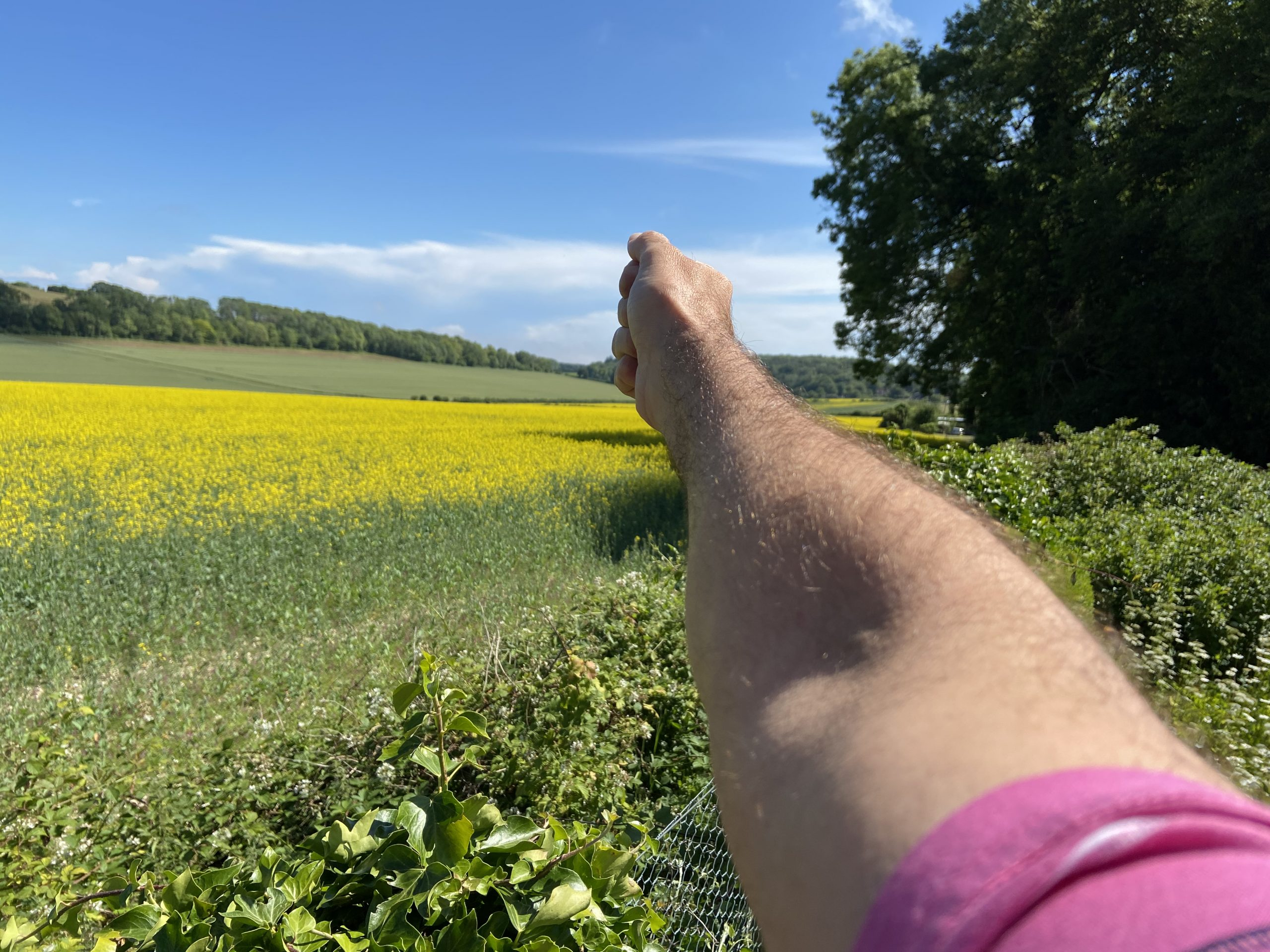 A man's hand and arm pointing across a rapeseed field (on a sunny day) s if wayfind